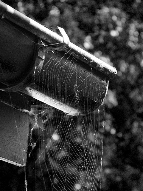 Spinnennetz an Regenrinne