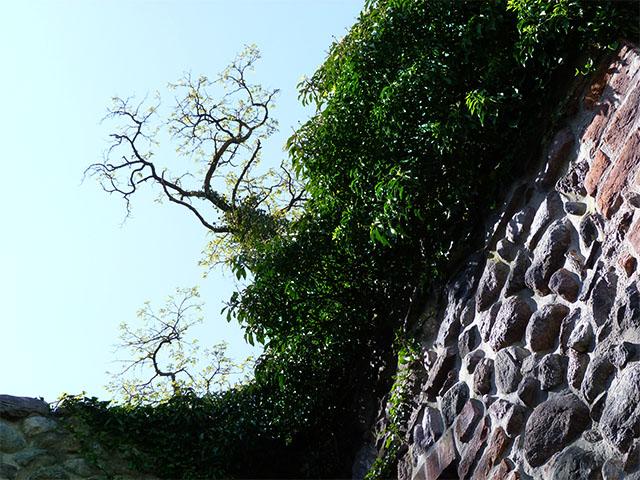 Steinmauer in Bernau bei Berlin