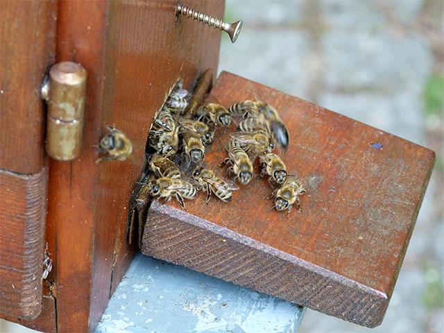 Bienenstock im Britzer Garten