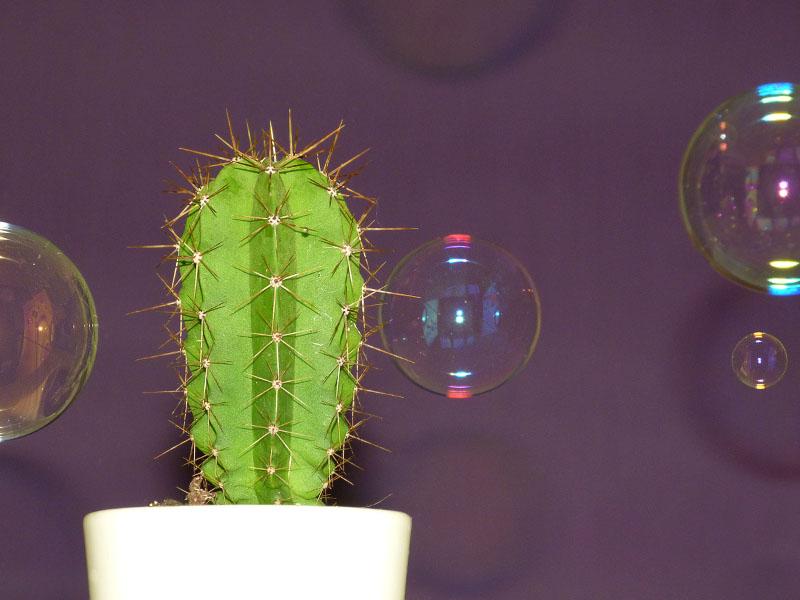 Kaktus mit Seifenblasen