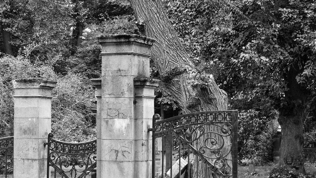Friedhof im Bürgerpark Pankow - schwarz/weiß