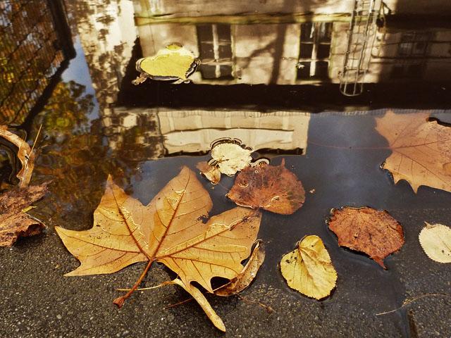 26|DREIZEHN - Herbst