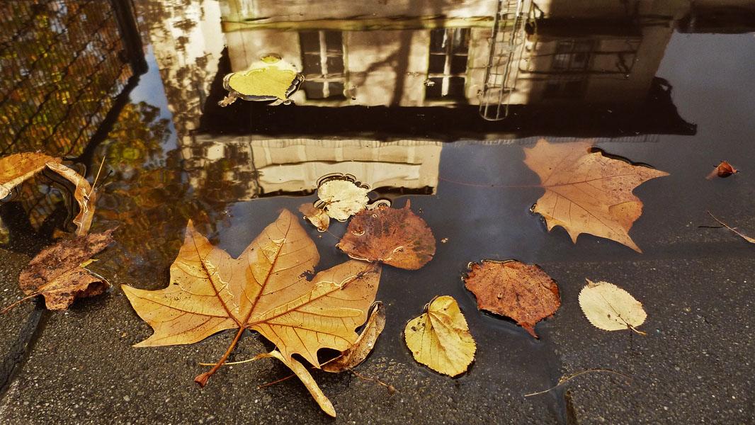 Herbst im Prater-Garten in der Kastanienallee