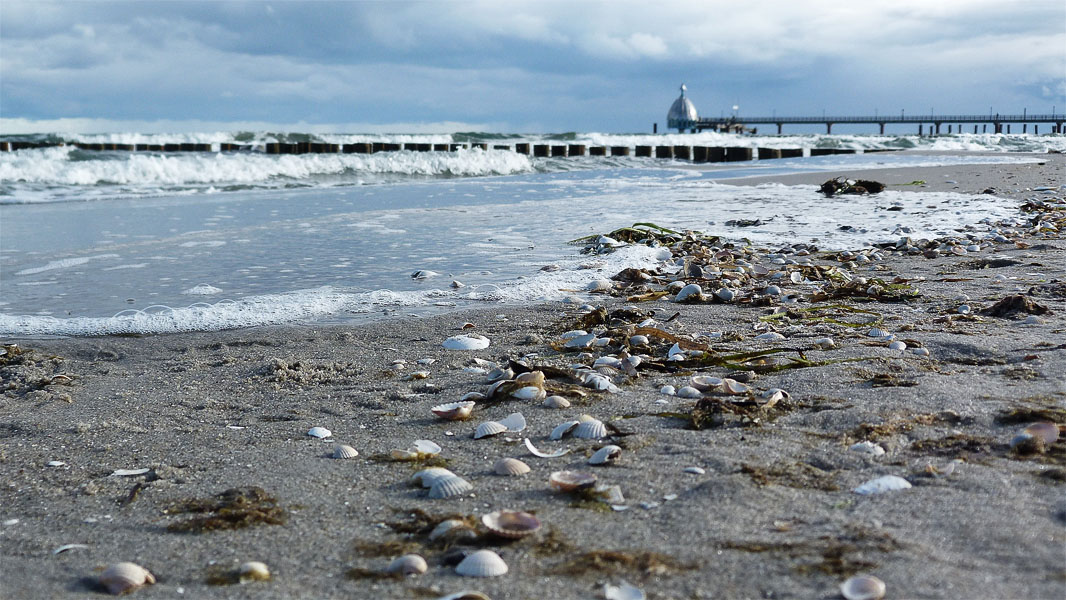Muscheln in Zingst an der Ostsee