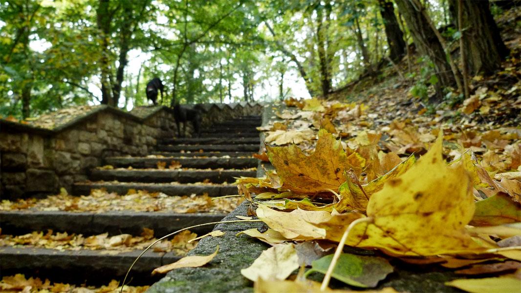 Herbstliche Trepe im Volkspark Friedrichshain