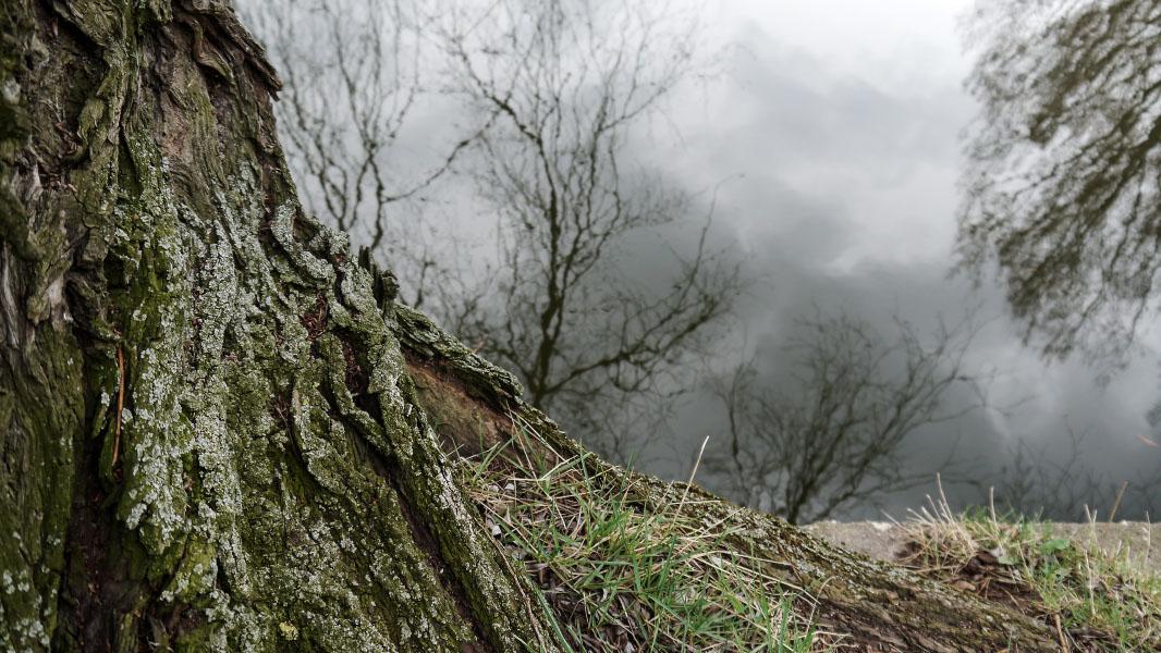Baum am Fennpfuhl