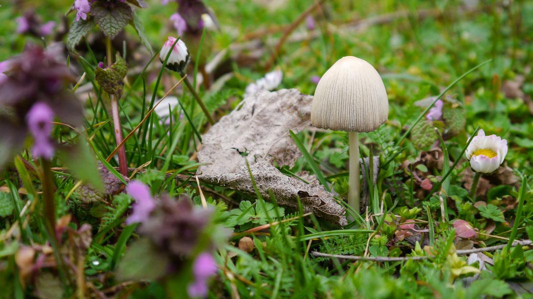 Einzelner Pilz auf Blumenwiese