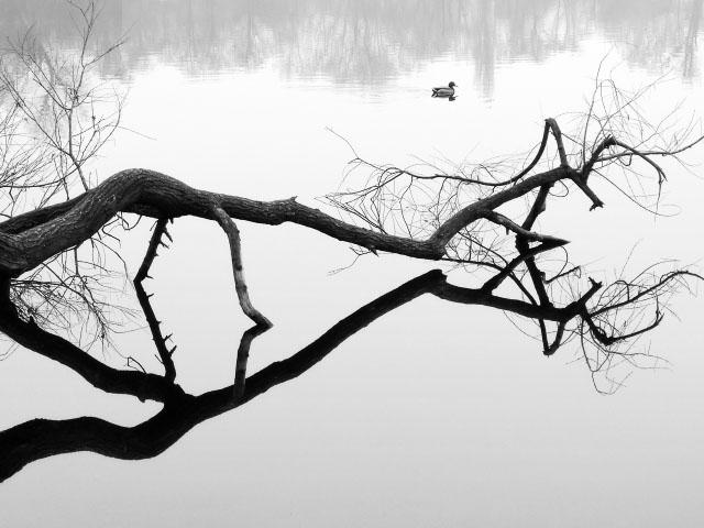 Ente im Weißensee - schwarz/weiß