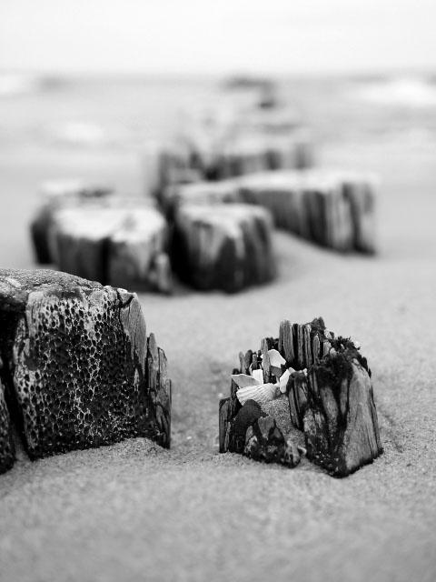 Buhne an der Ostsee in schwarz-weiß