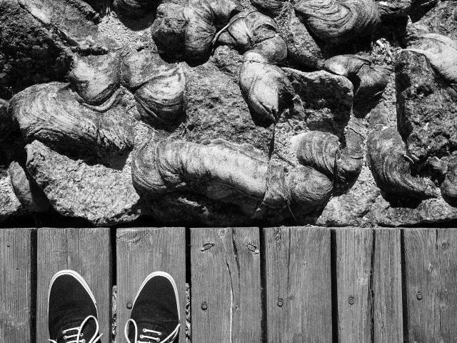Dierhagen - Schuhe in schwarz-weiß