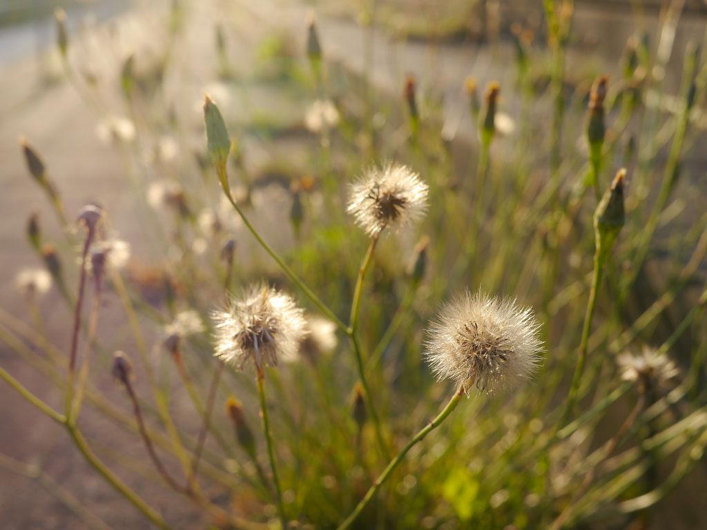 Sommerblumen im Kissingenstadion