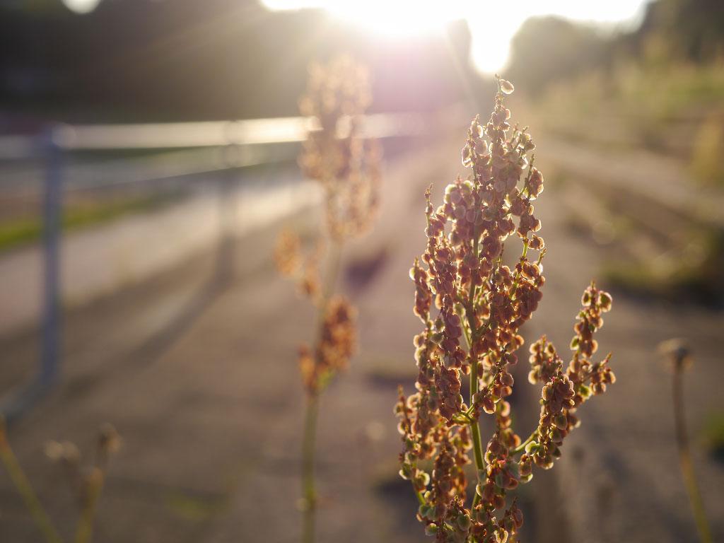 Sommerpflanze im Kissingenstadion