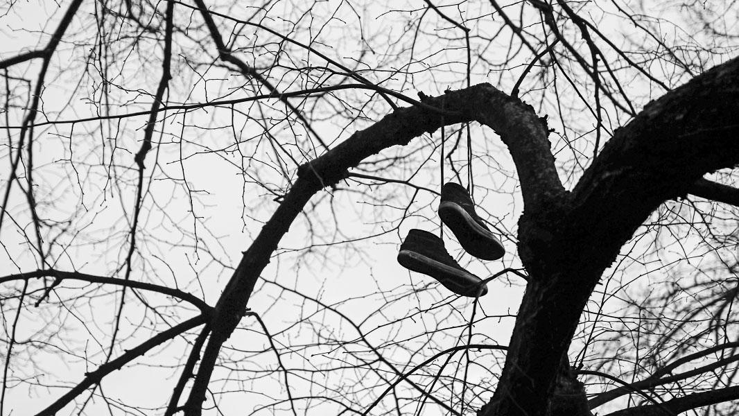 Schuhe im Baum