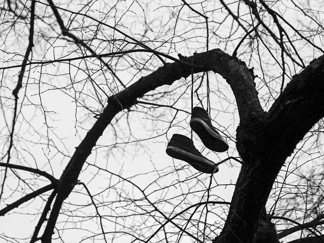 Sneakers im Baum