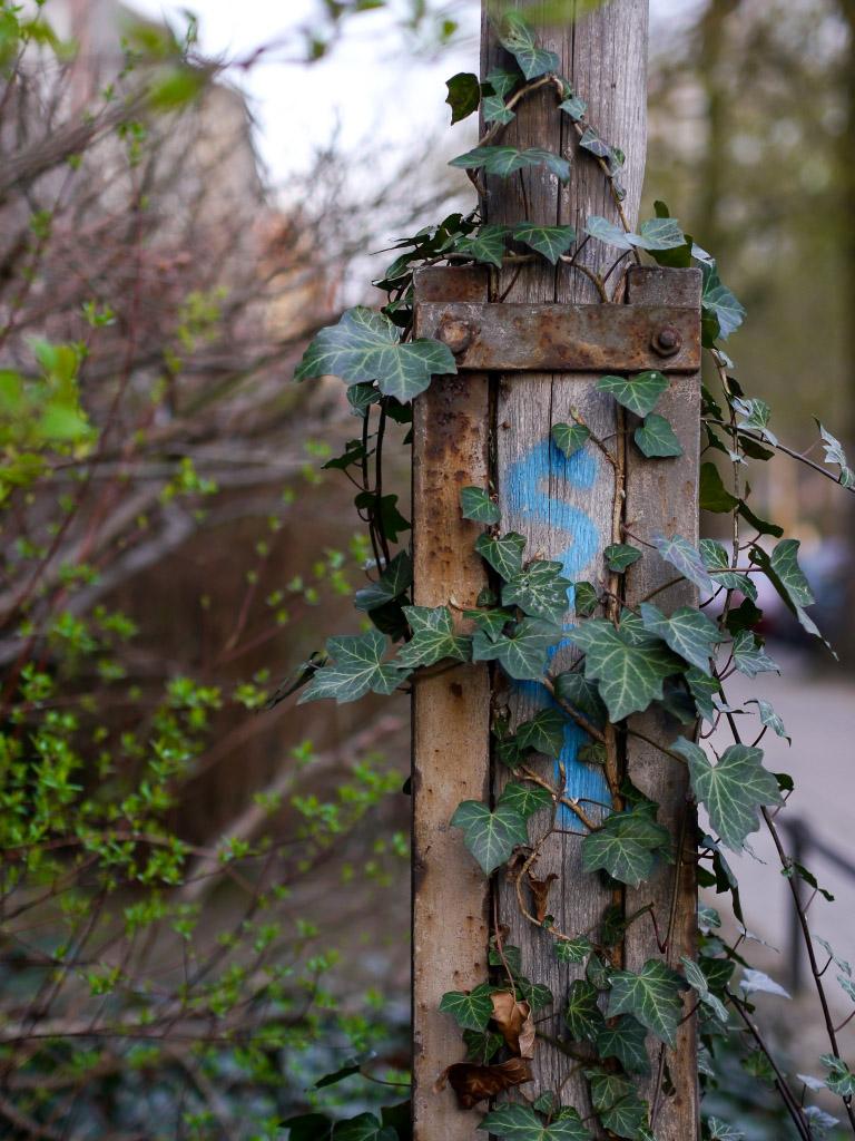 Holzmast mit Efeu bewachsen