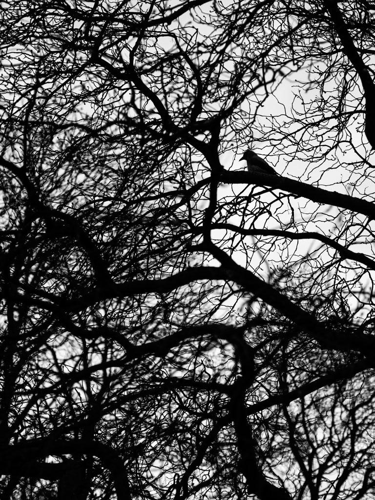 Vogel im Geäst - schwarz/weiß
