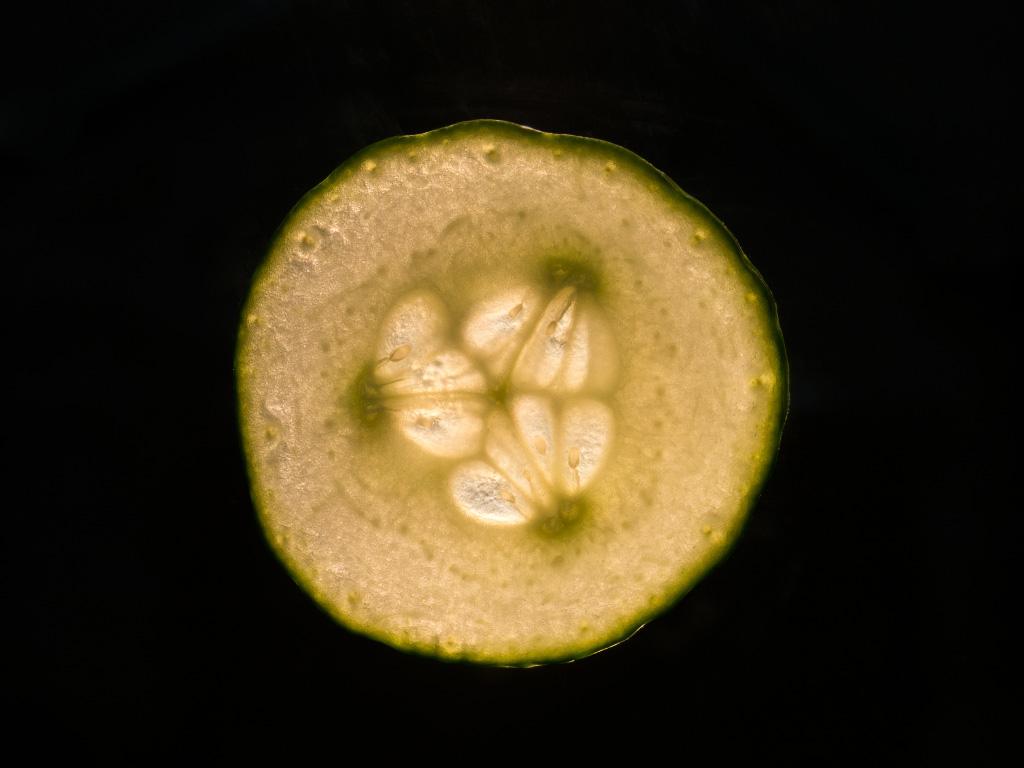 Gurkenenscheibe durchleuchtet
