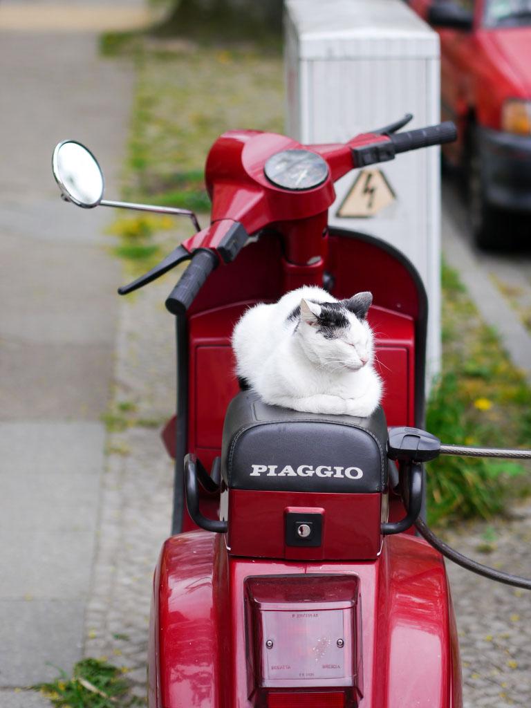 Katze auf Motorroller