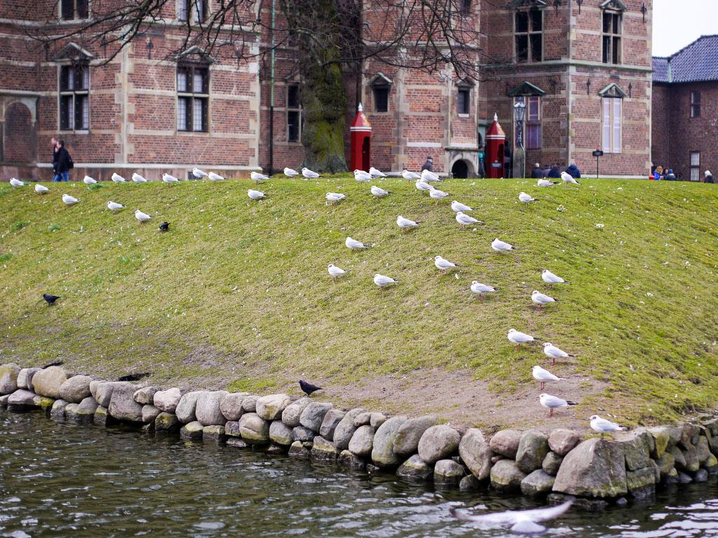 Möwen im Kongens Have in Kopenhagen