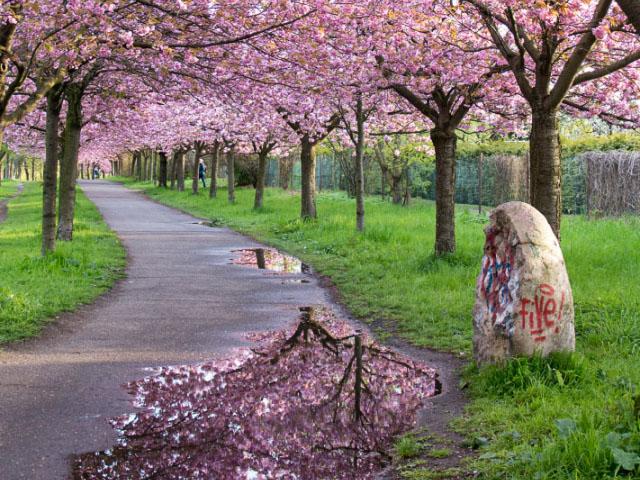 12 magische Mottos – Mai: Blüten & Blätter
